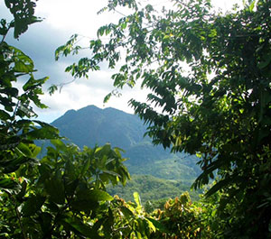 Criollo Cacao Forest and Bright Earth Foods