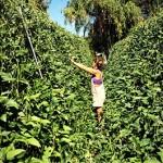 Happy Dirt Veggie Patch Snap Peas