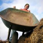 Happy Dirt Veggie Patch (Wheelbarrow)