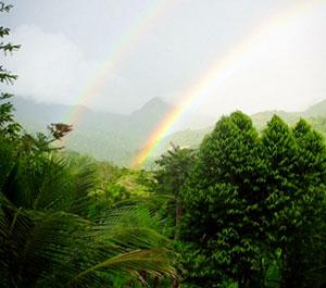 Rainbow Jungle of Bright Earth Foods