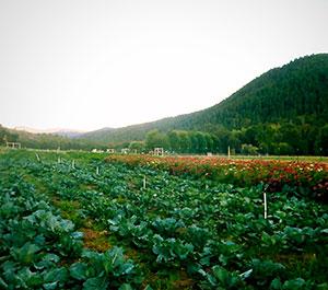 Wandering Fields Farm