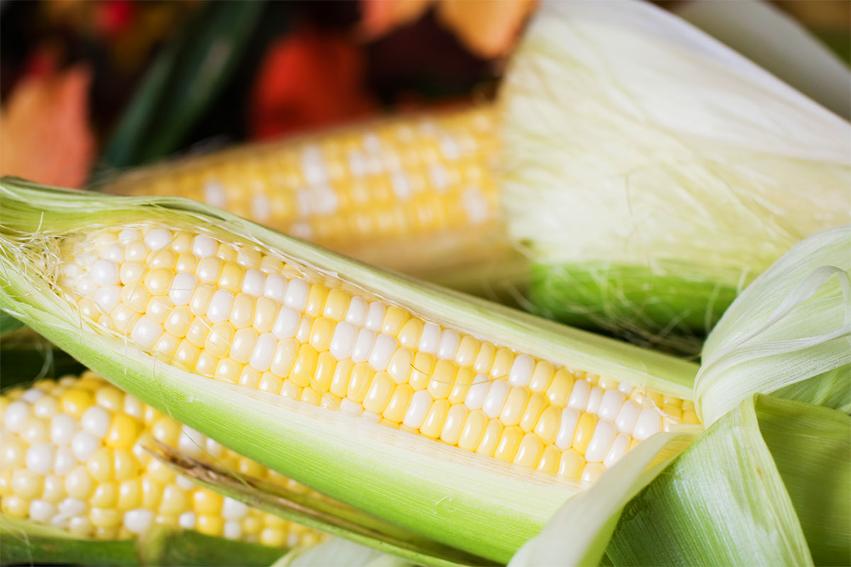 Sweet Bicolor Corn
